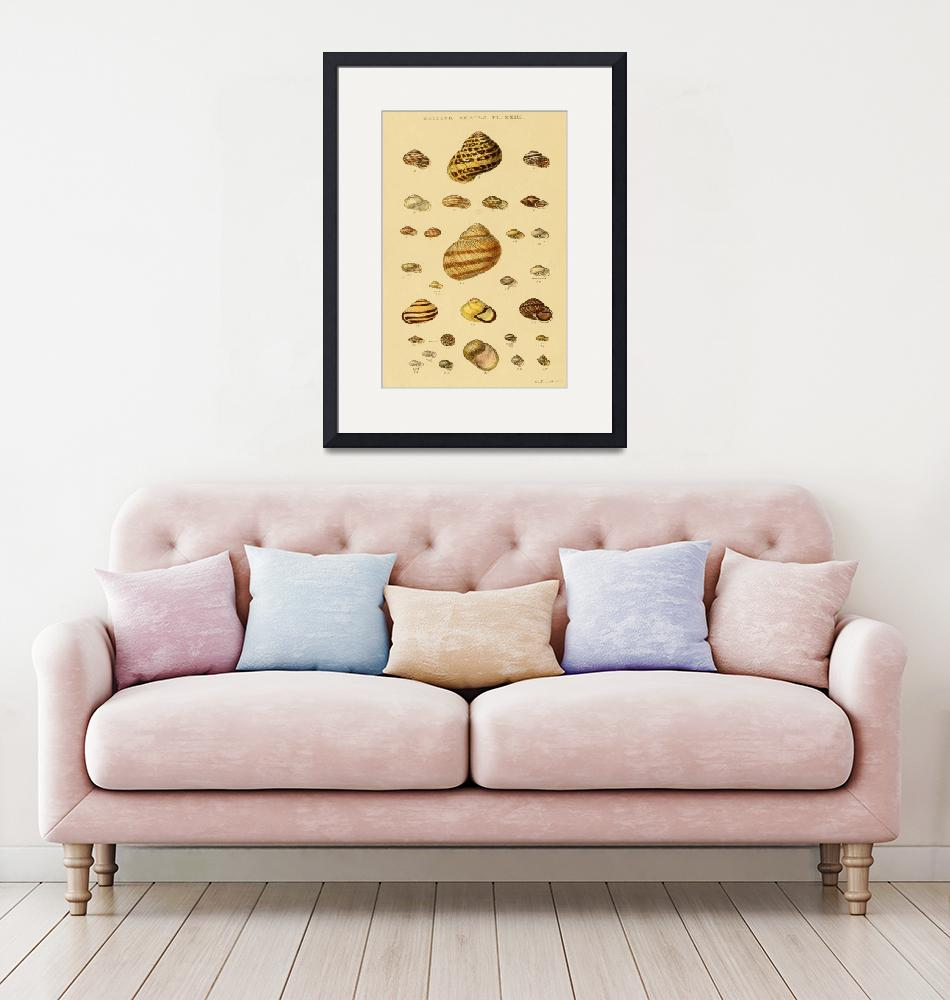"""""""Vintage Snail Shell Drawings""""  by Alleycatshirts"""