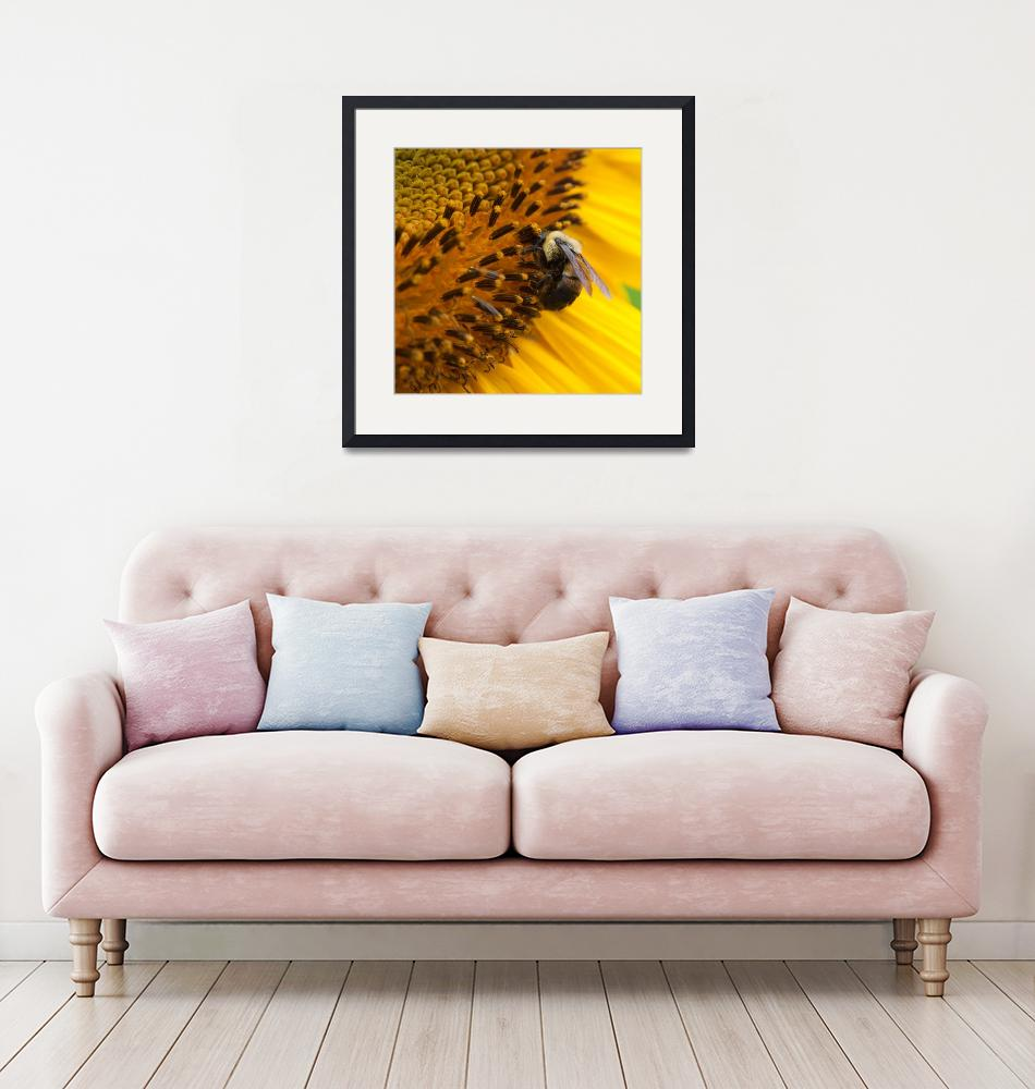 """""""Bee Collecting Pollen"""" (2019) by zscottphoto"""