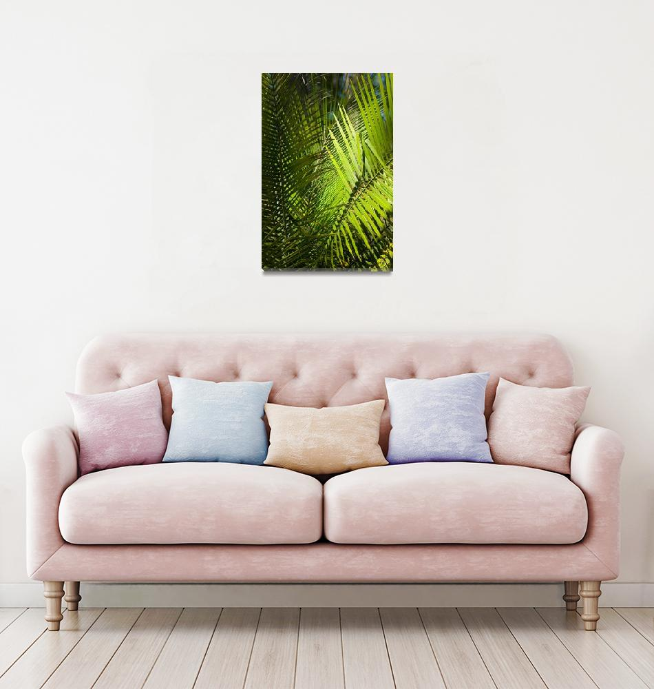 """""""Palms""""  by AliciaFrese"""