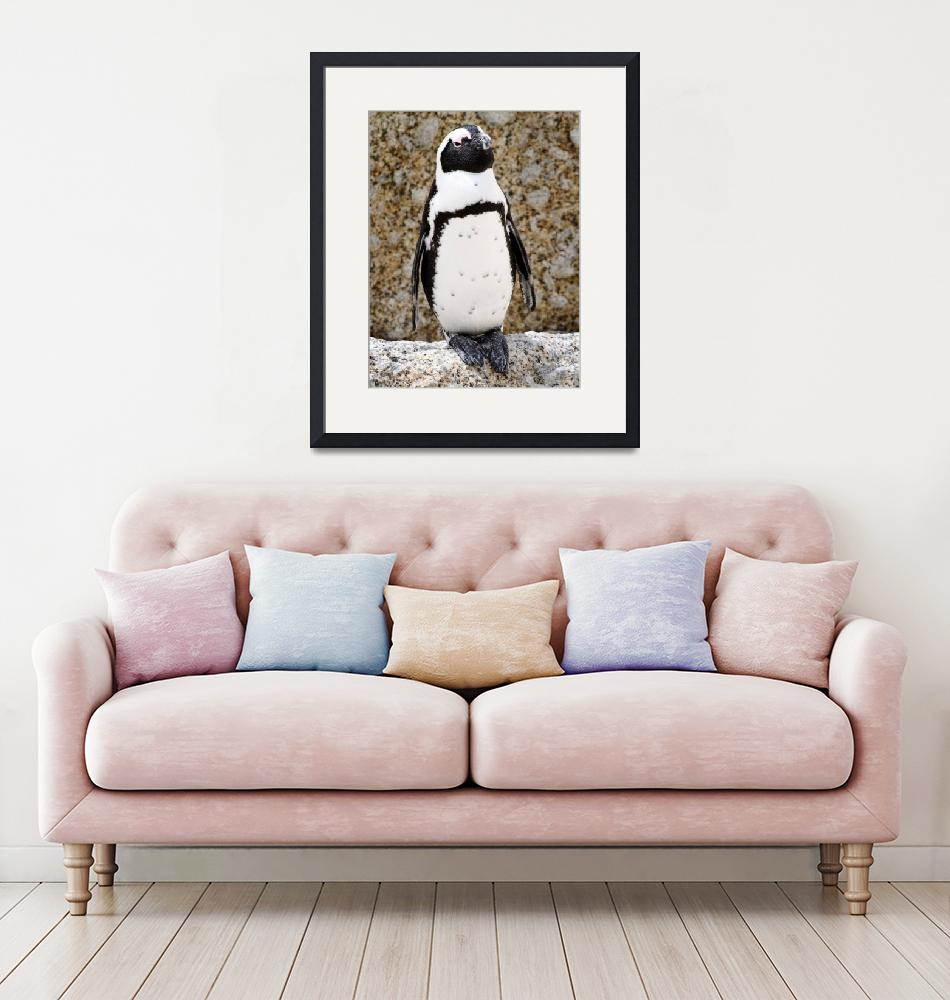 """""""African Penguin""""  (2008) by dianesmook"""