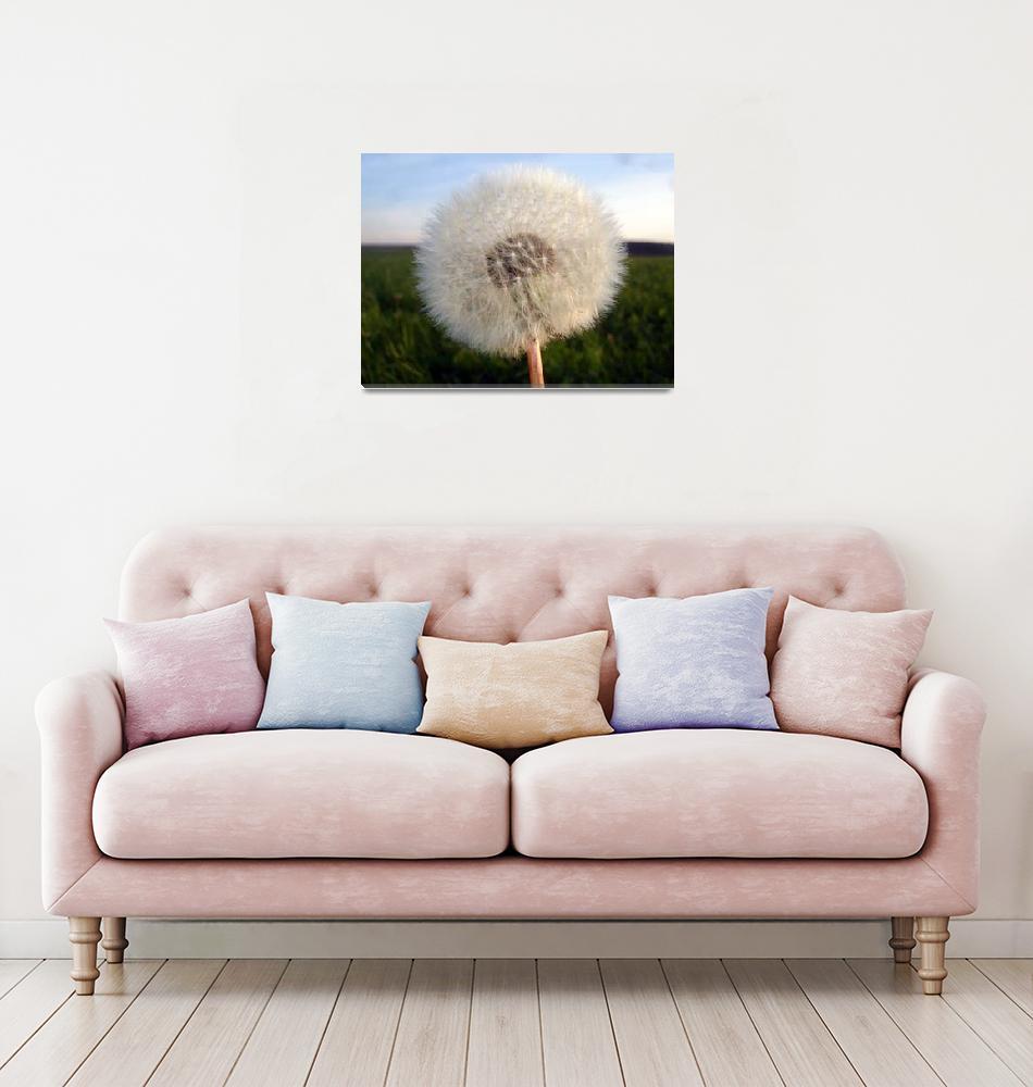 """""""Deutsch Dandelion""""  by Artsart"""