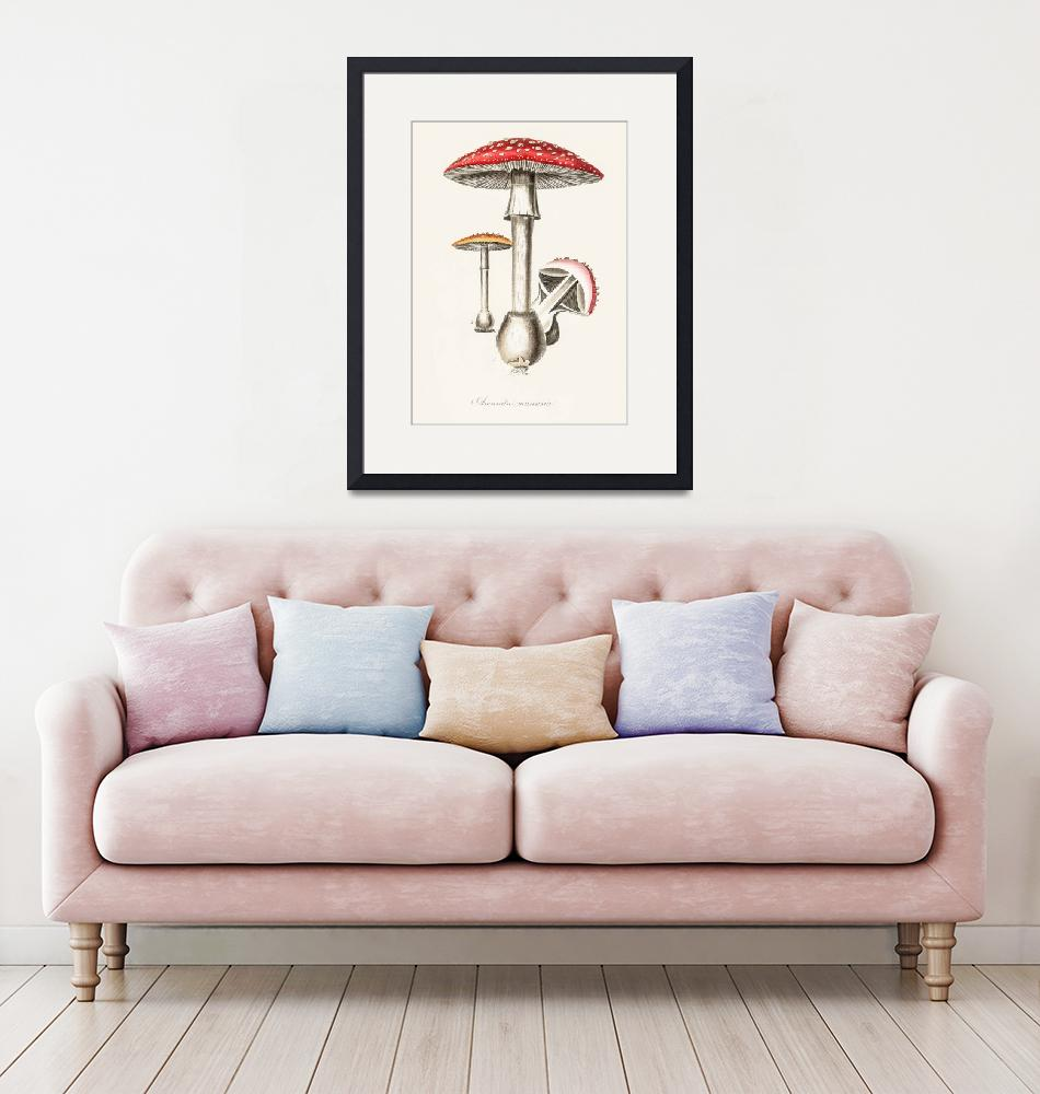 """Vintage Botanical Amanita muscaria"" by FineArtClassics"