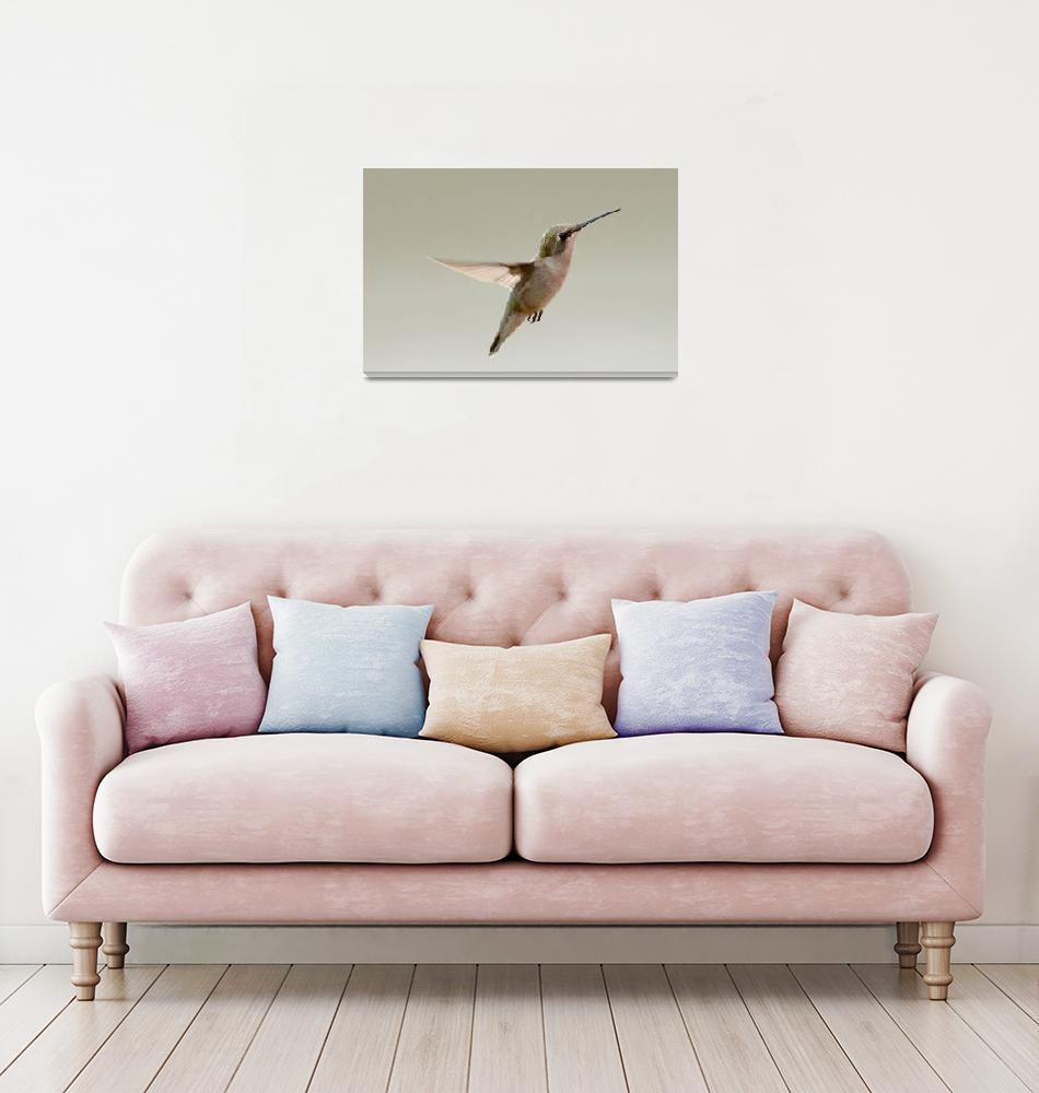 """Hummingbird""  by cameragal"