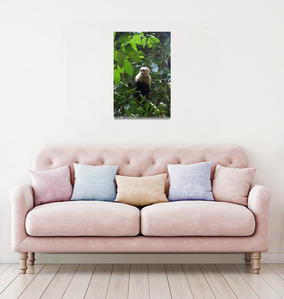 """""""Wild Capuchin Monkey""""  by Eileen"""