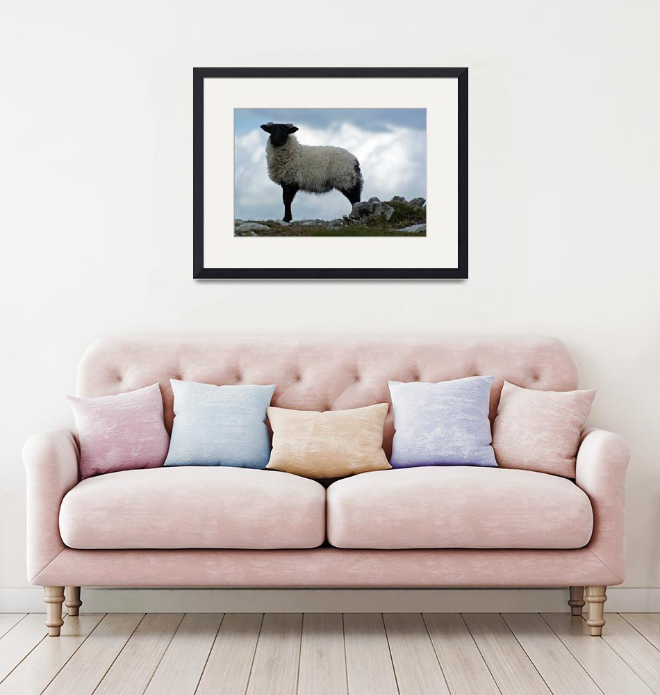 """""""Sheep at Croagh Patrick""""  (2009) by staceybassoon"""