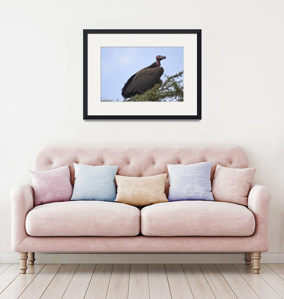 """""""Eagle in Tanzania""""  by Teager"""