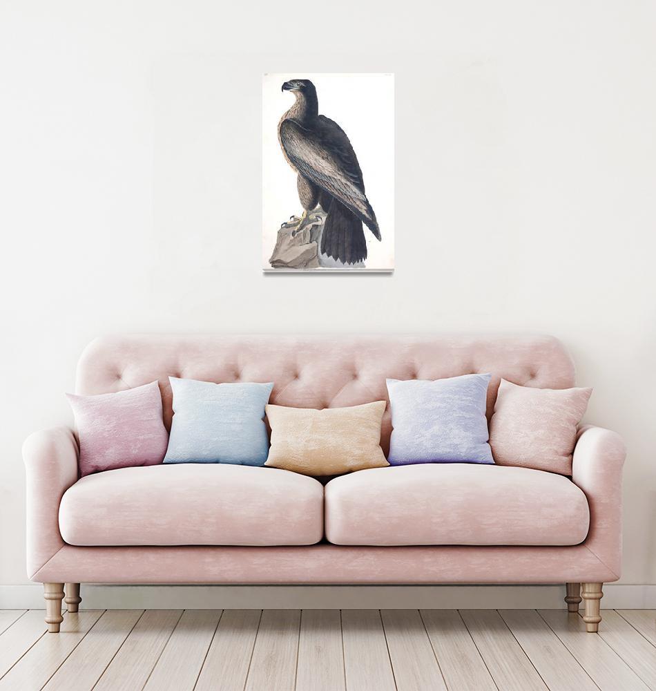 """Bird of Washington, Plate 11""  by FineArtClassics"