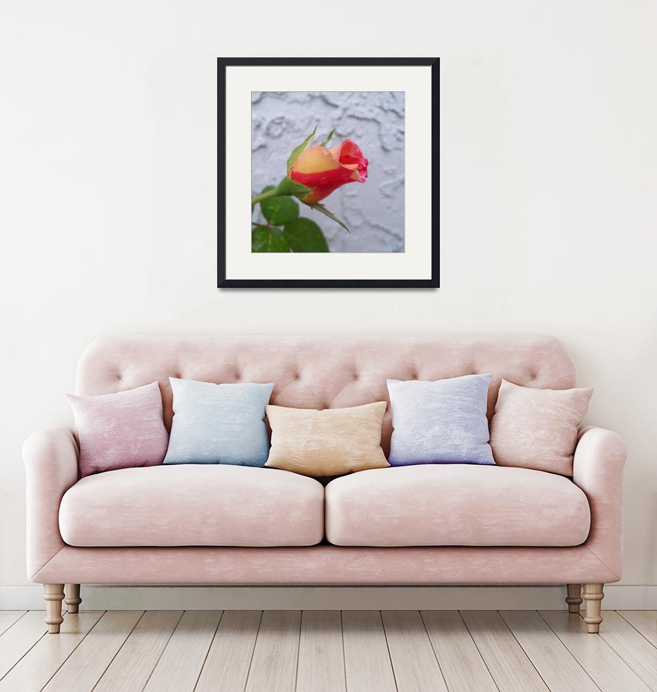 """""""Cream and red Dick Clark Rose bud""""  (2018) by NormaStampSunnyDaze"""