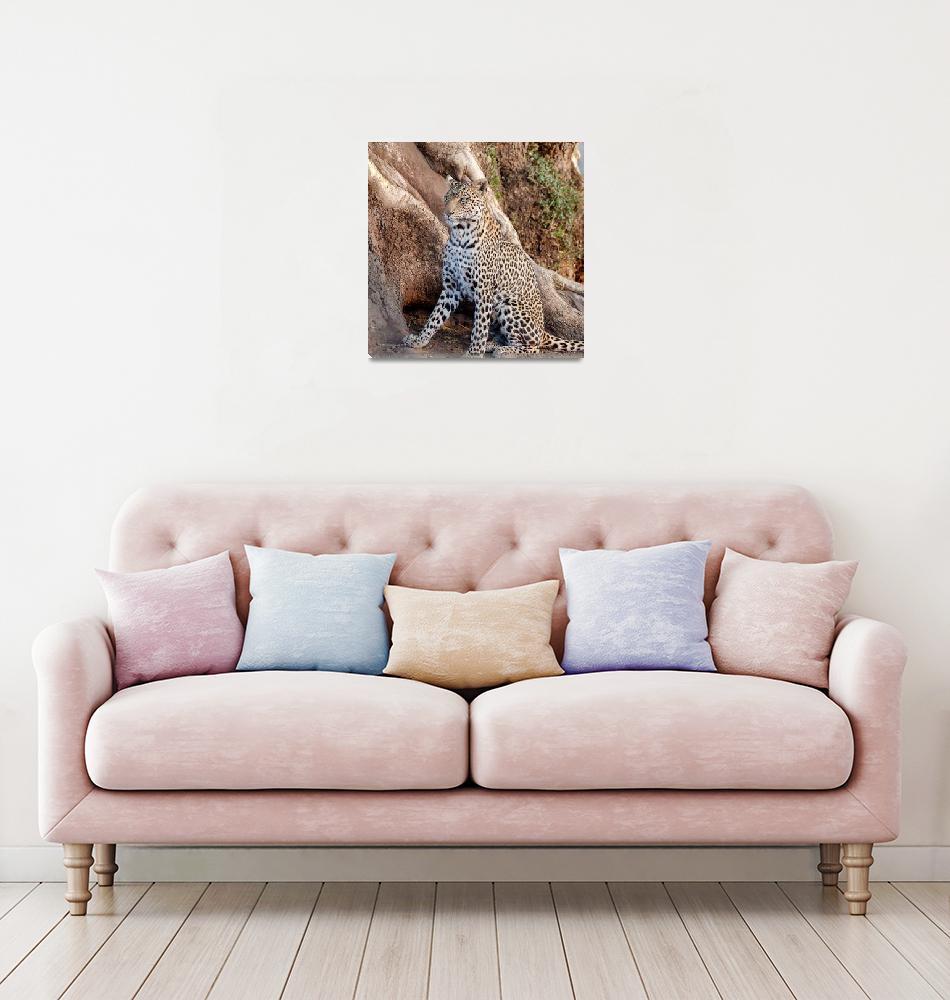 """Leopard Sitting in Botswana Photograph""  (2019) by JPRVenturesLLC"