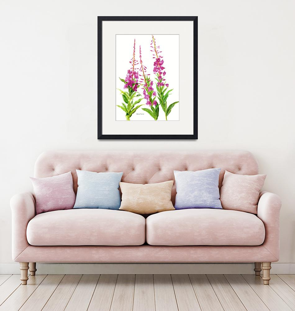 """""""Fireweed (white background)""""  (2013) by Pacific-NW-Watercolors"""