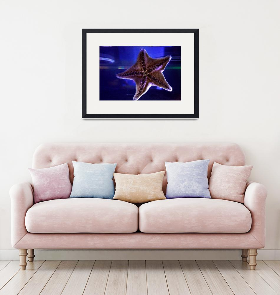 """""""star fish""""  (2010) by Beauty_By_Photography"""