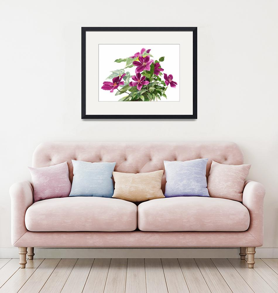 """""""Red Violet Clematis with white background""""  (2016) by Pacific-NW-Watercolors"""