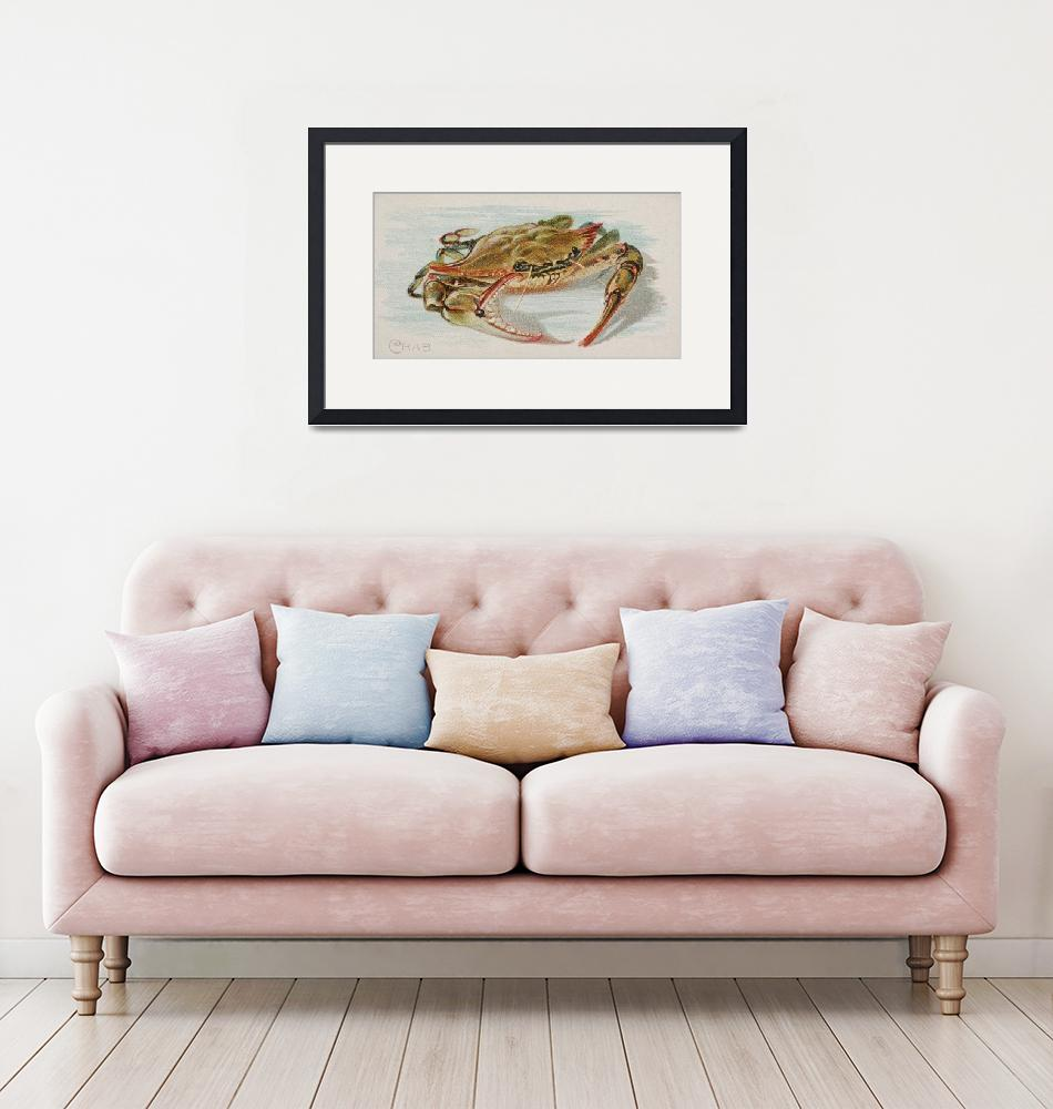 """""""Vintage Illustration of a Crab (1889)""""  by Alleycatshirts"""