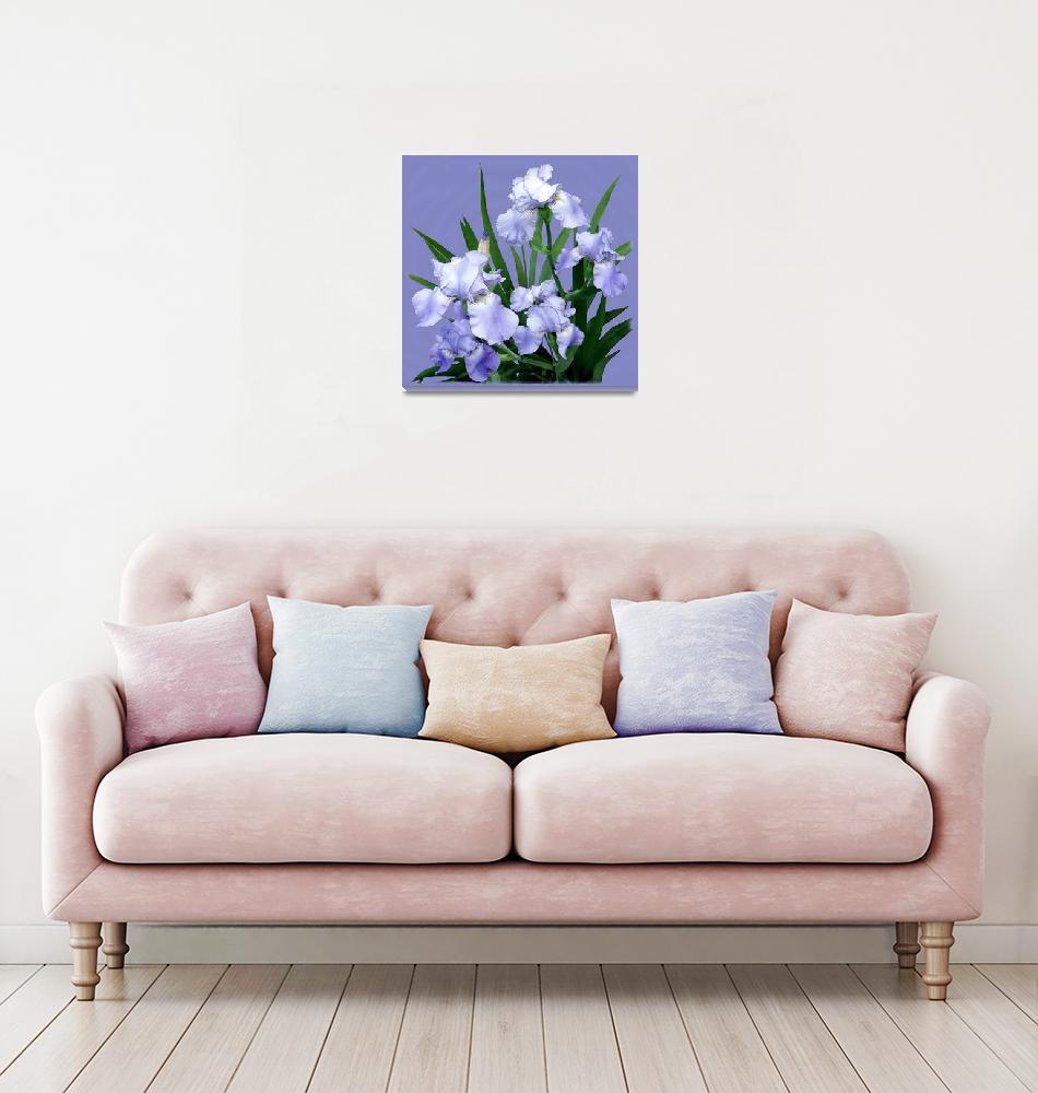 """""""Blue Iris""""  by jvittek"""