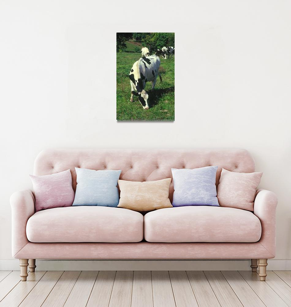 """""""Country Cow""""  (2005) by photocatphoto"""