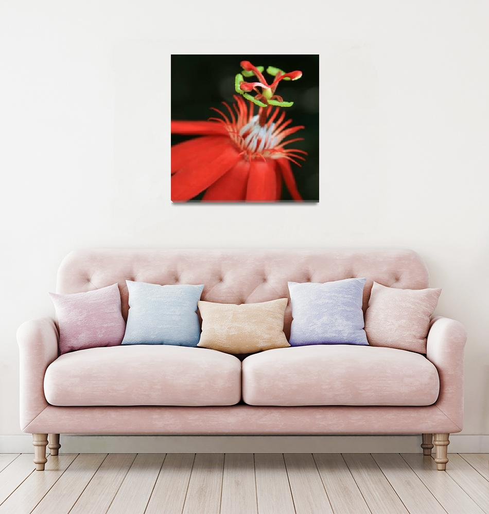 """Passiflora vitifolia - Scarlet Red Passion Flower""  (2012) by sharonmau"