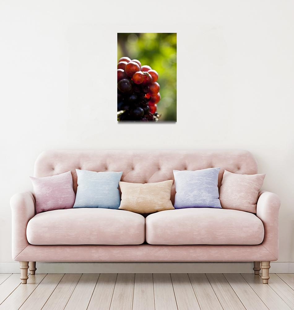 """""""Ladybug on the bunch""""  (2012) by thewaltonsare"""