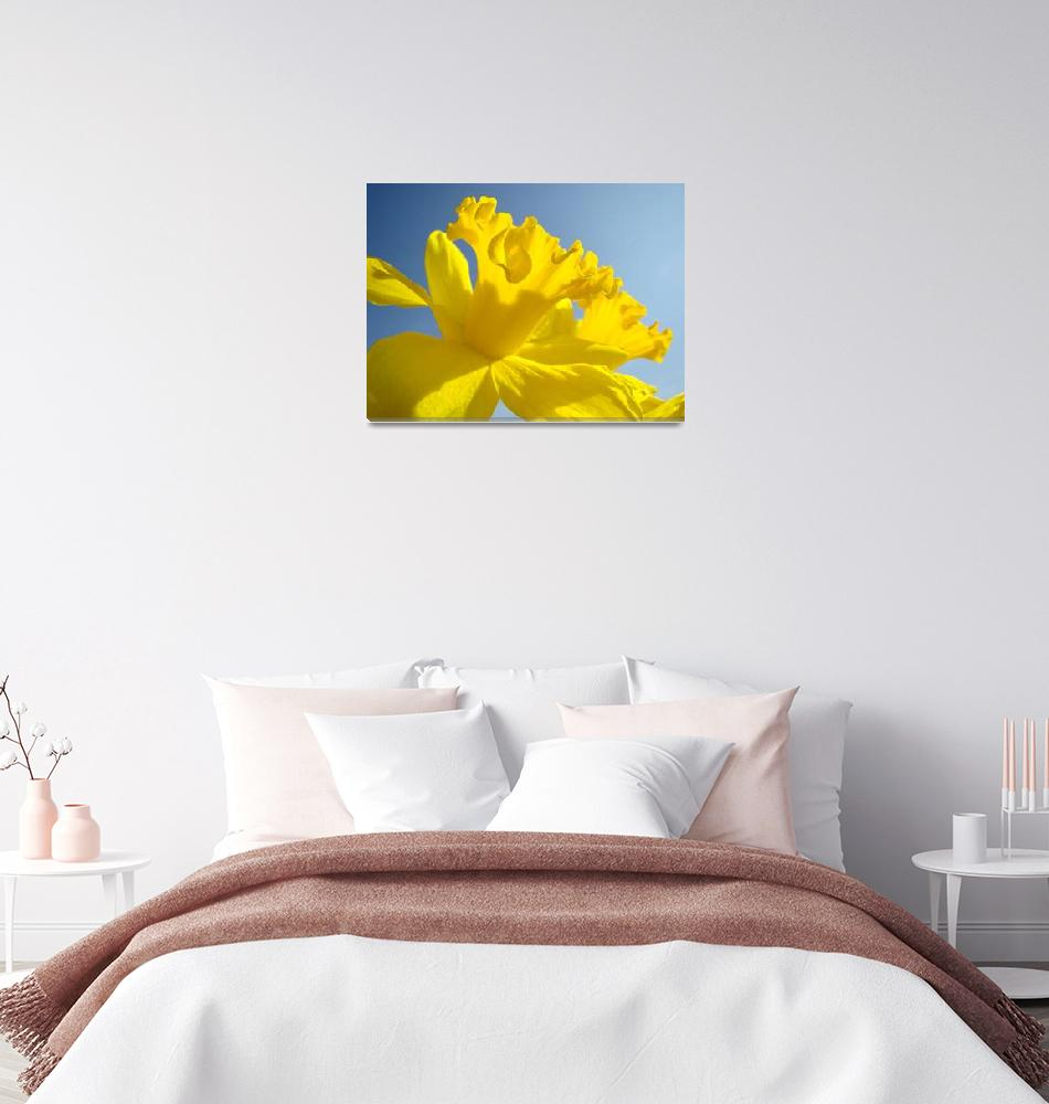 """Spring Artwork Sunlit Daffodil Flowers Floral Art""  (2010) by BasleeTroutman"