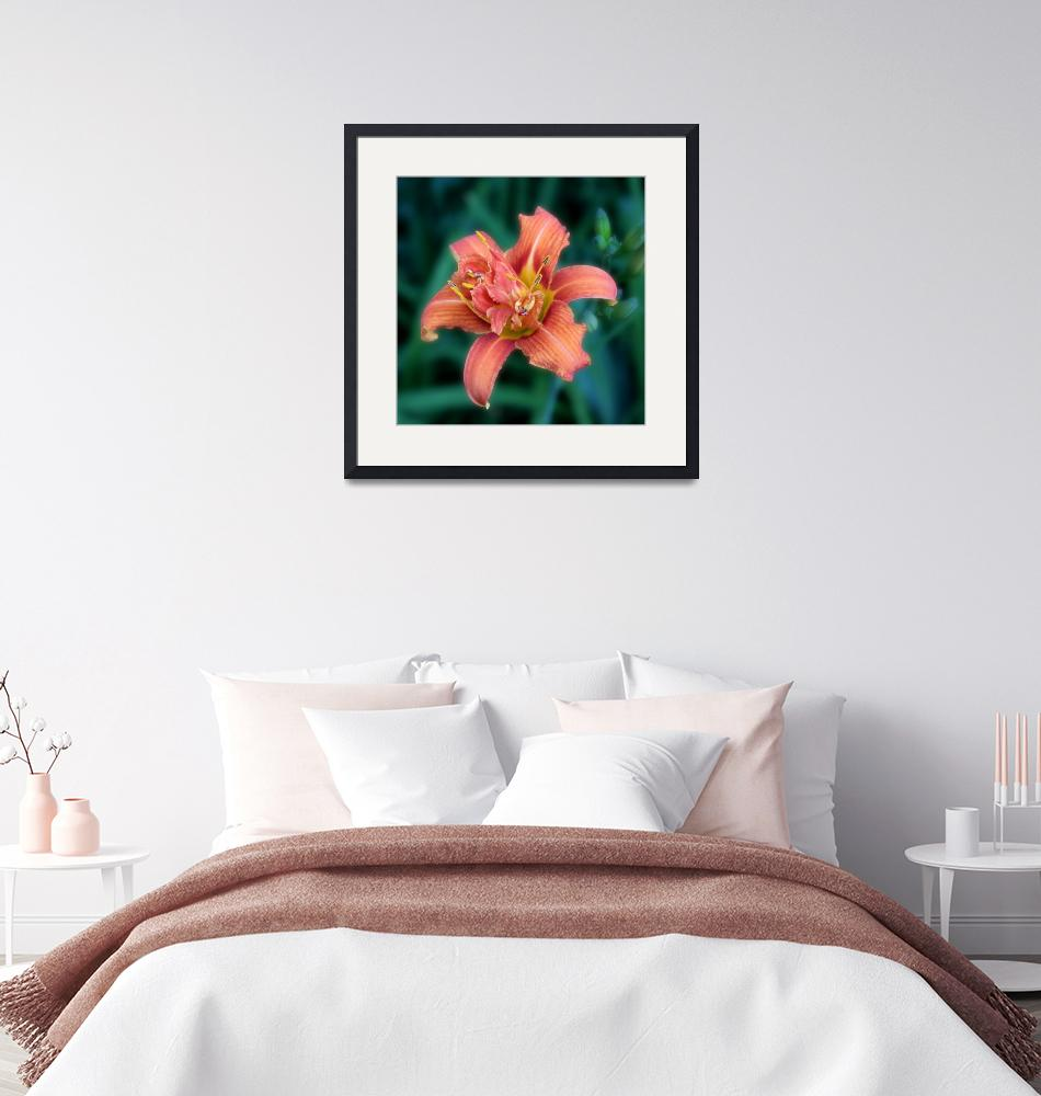 """""""Day Lilly""""  (2013) by cameragal"""