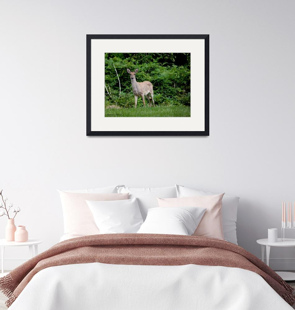 """""""A Young Deer in the Field""""  (2019) by Kimmary"""