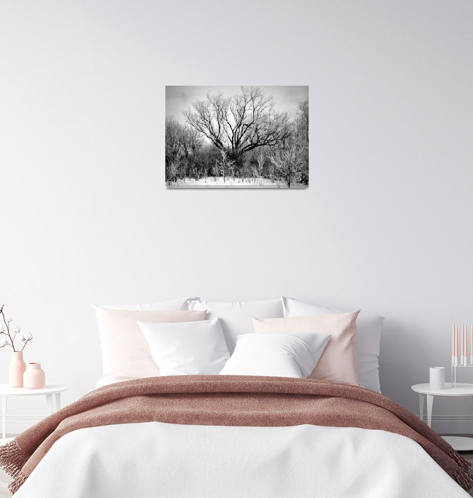 """""""Photography For Sale - Frosted Trees Black & White""""  (1994) by word1001"""
