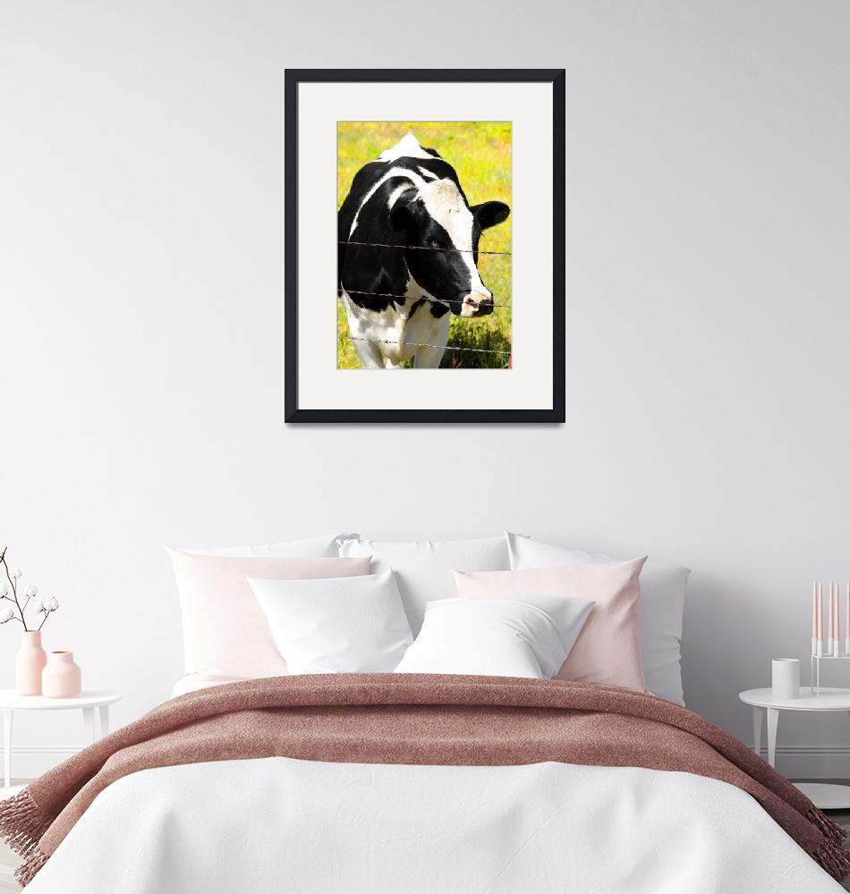 """""""Cow Lookin at You""""  (2011) by cr8tivguy"""