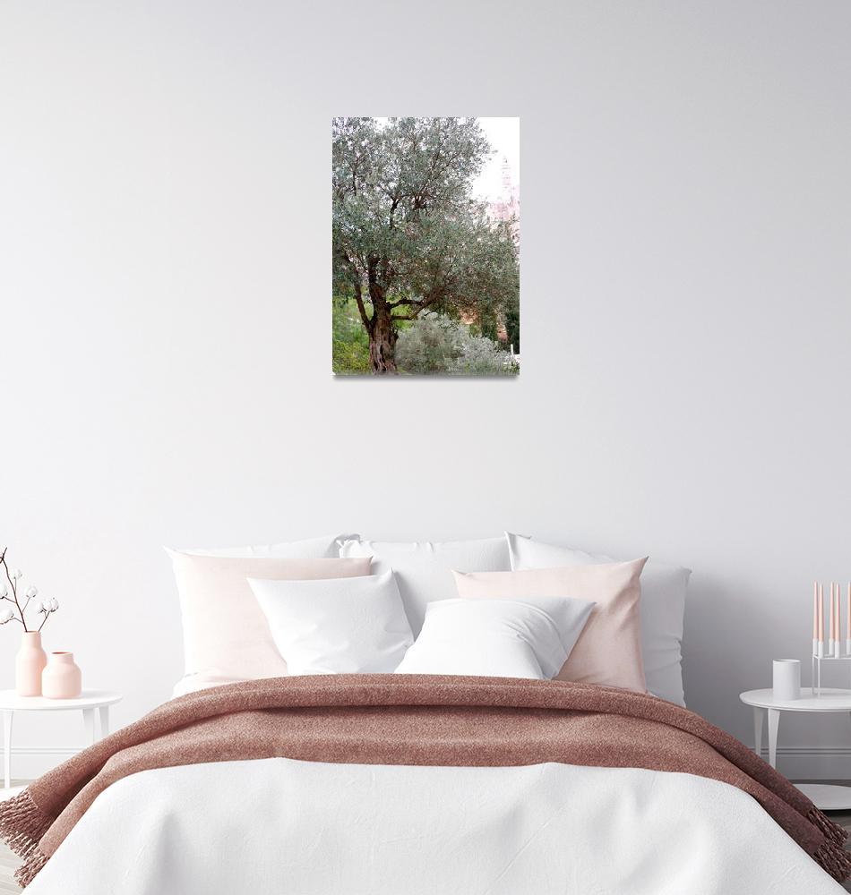 """""""Olive Grove Yemen Moshe""""  (2012) by nahone"""
