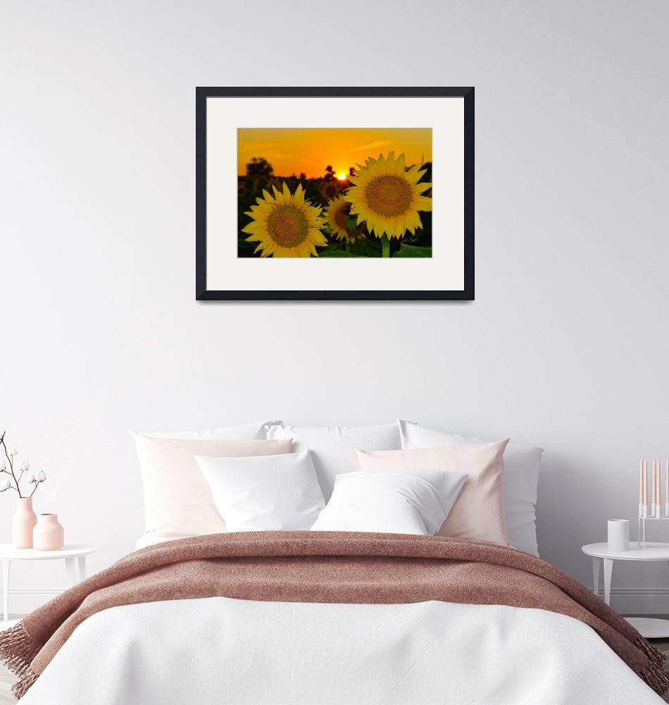 """""""Sunflowers at Sunset 0358""""  by TaylorMadeArtUS"""