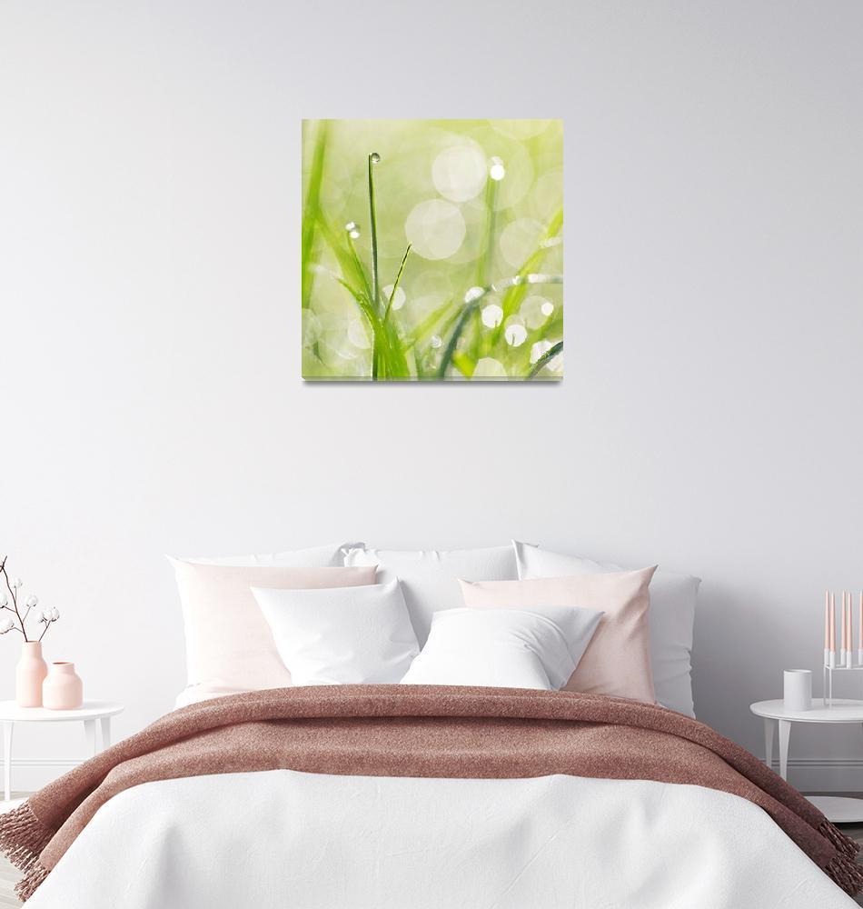 """Dewdrops in the Sunlit Grass Square Format""  (2014) by NatalieKinnear"