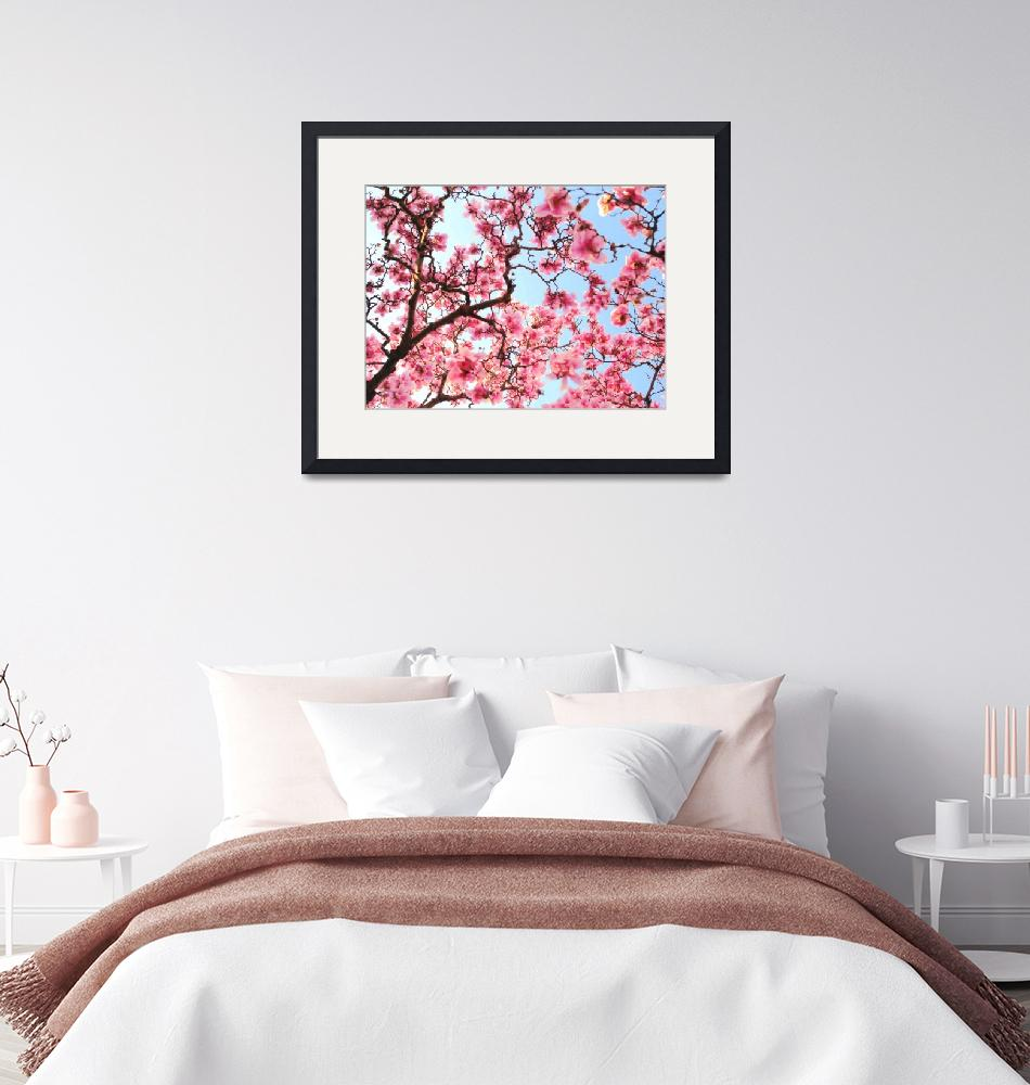 """""""Cherry Blossoms""""  (2008) by seanschleifer"""