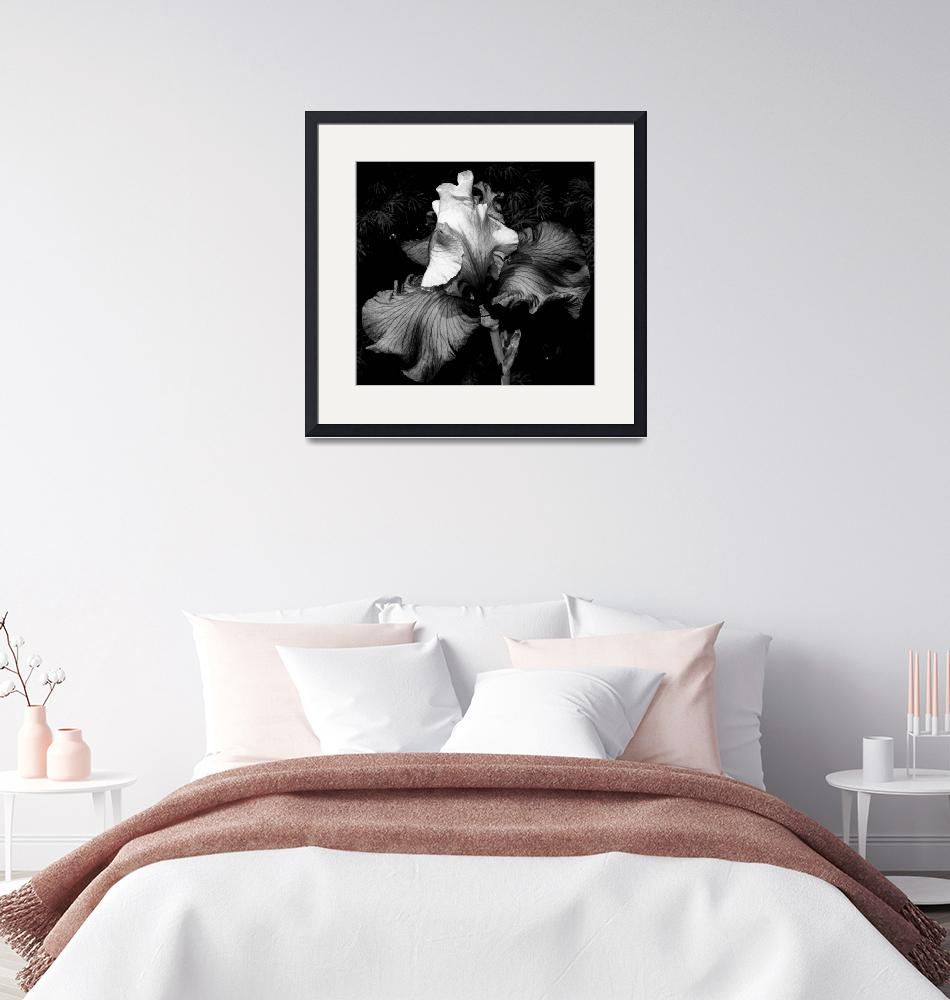 """""""Iris In Black And White"""" (2009) by bavosiphotoart"""