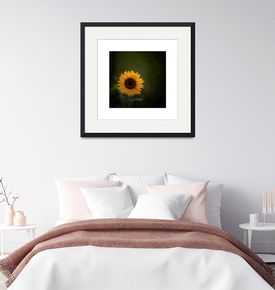 """Sunflower""  (2012) by mccarnphoto"