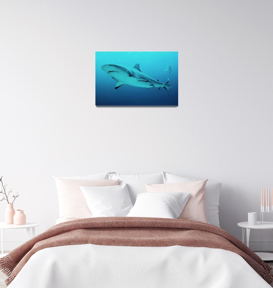 """Lemom Shark, Bahamas""  (2016) by RoupenBaker"