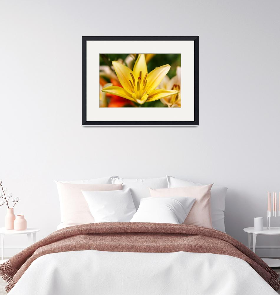 """""""Yellow Lily""""  by PaulTruckel"""