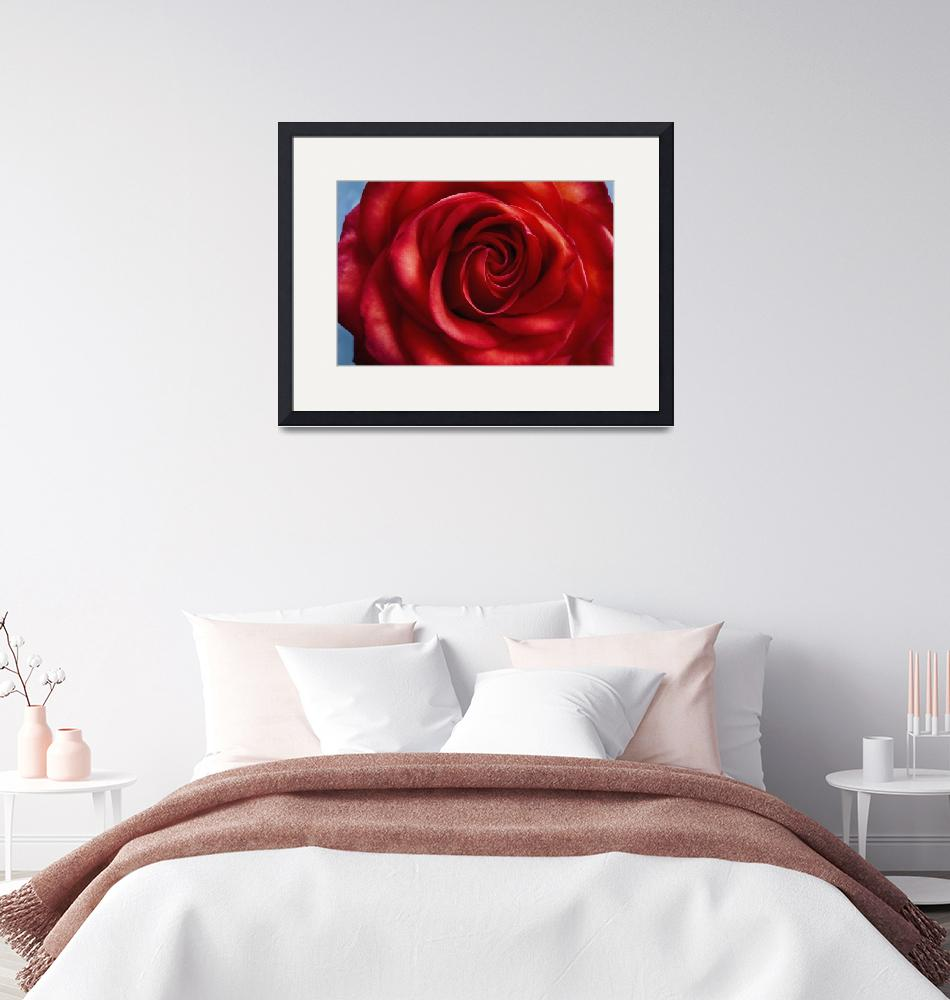 """""""Romantic Red Rose""""  (2016) by SoulfulPhotos"""