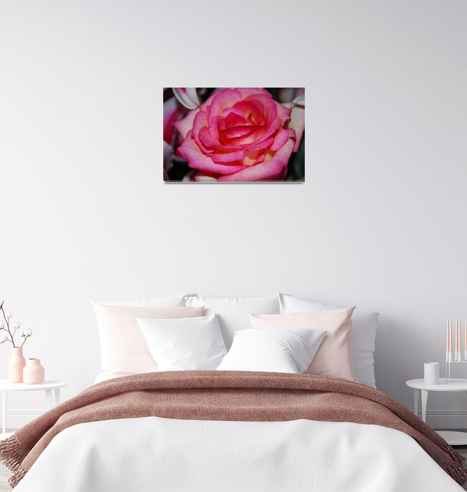"""Pink Rose 2""  by Rmbartstudio"