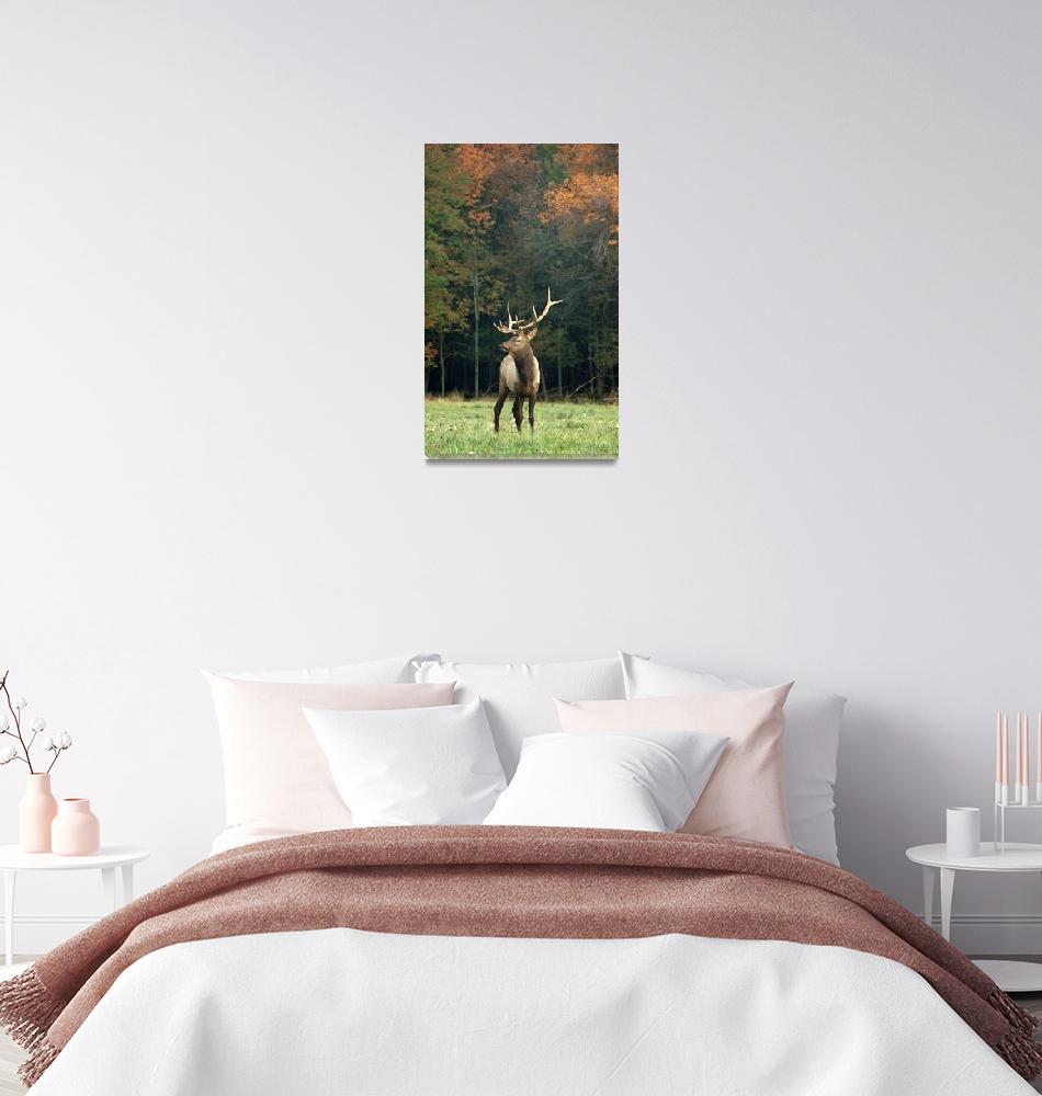 """""""Bull Elk in Fall""""  (2009) by LarryBohlin"""