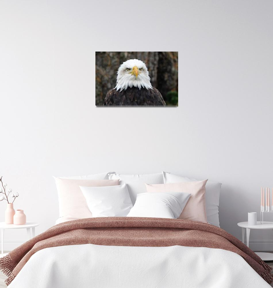 """The Bald Eagle""  (2015) by ImageMonkey"