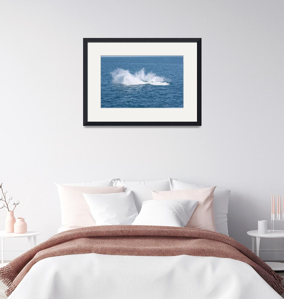 """""""NaP_ Whale Watching025a""""  by nevilleprosser"""