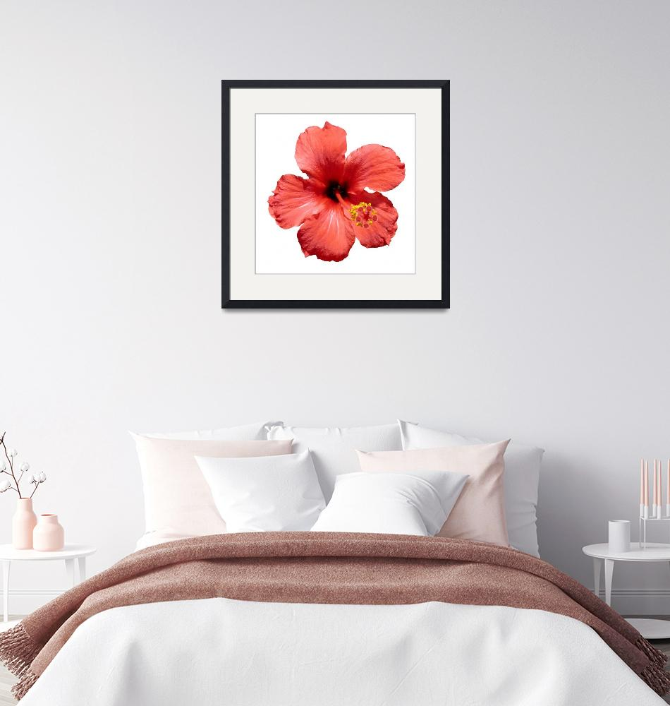 """""""Red Hibiscus flower""""  (2009) by yio"""