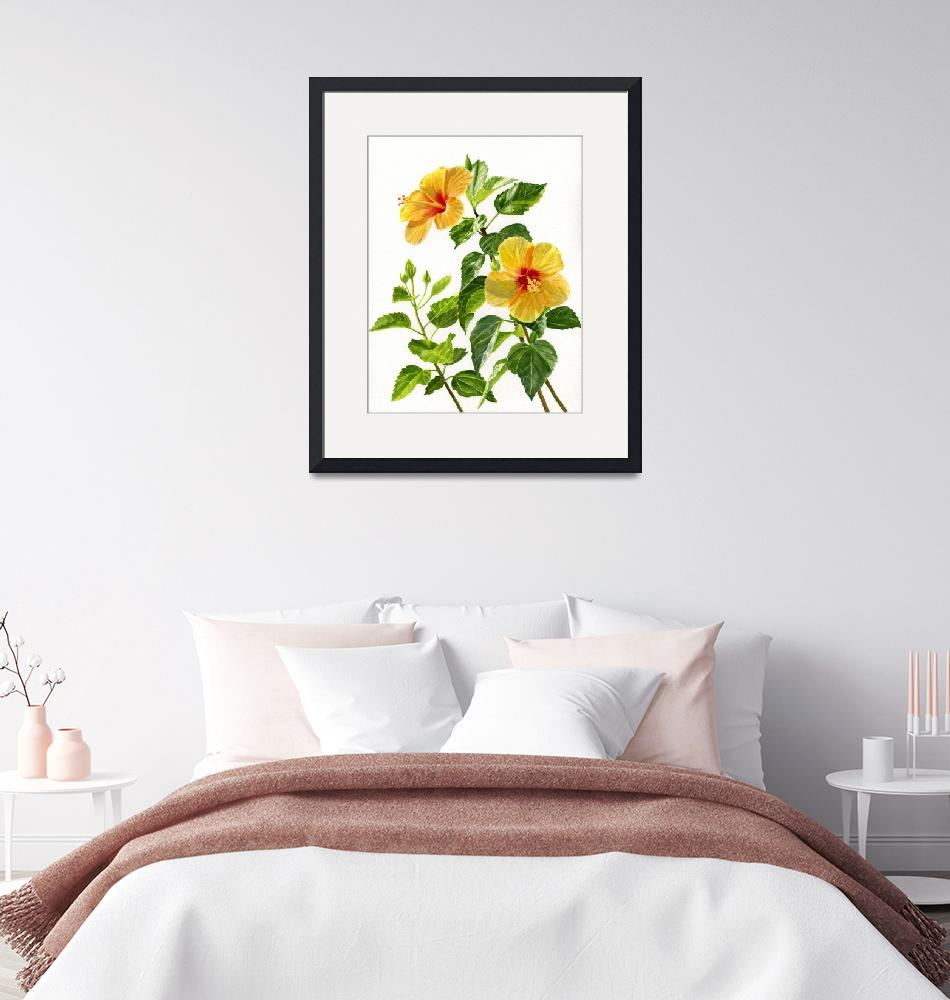 """""""Yellow Hibiscus with White Background""""  (2017) by Pacific-NW-Watercolors"""