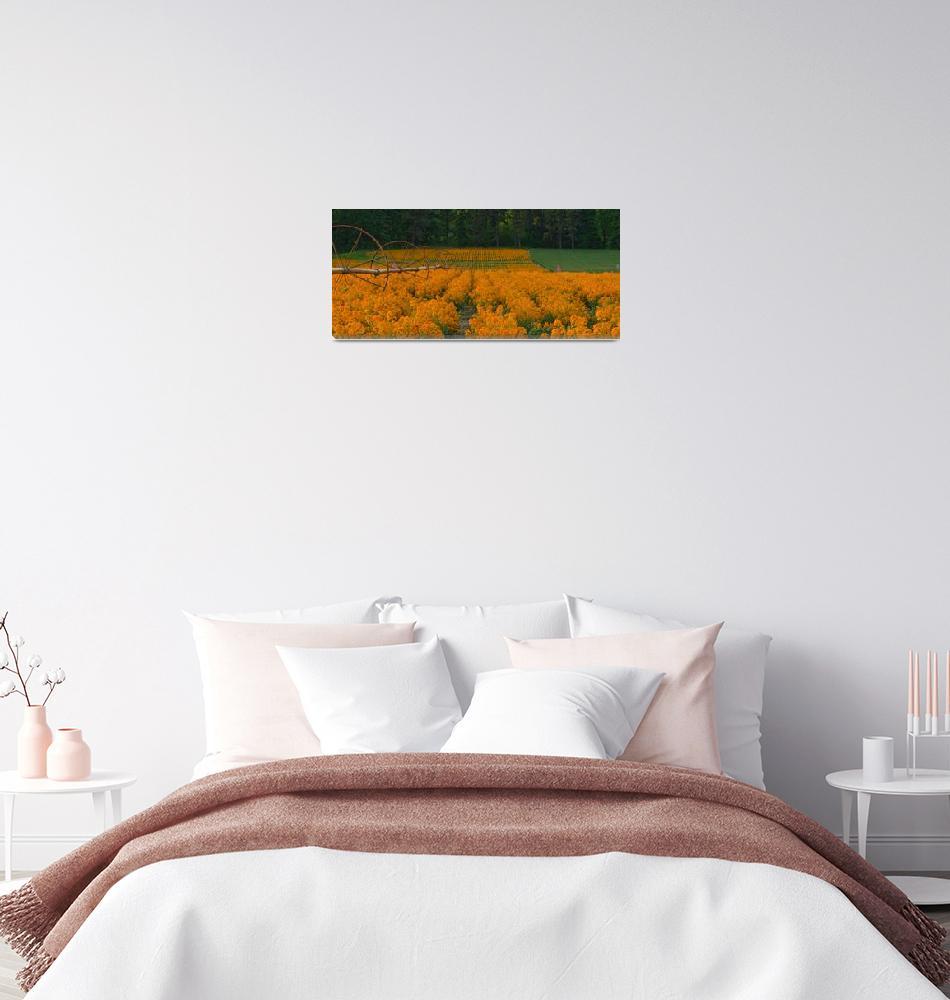 """""""Field of Wallflowers""""  (2015) by boppintheblues"""