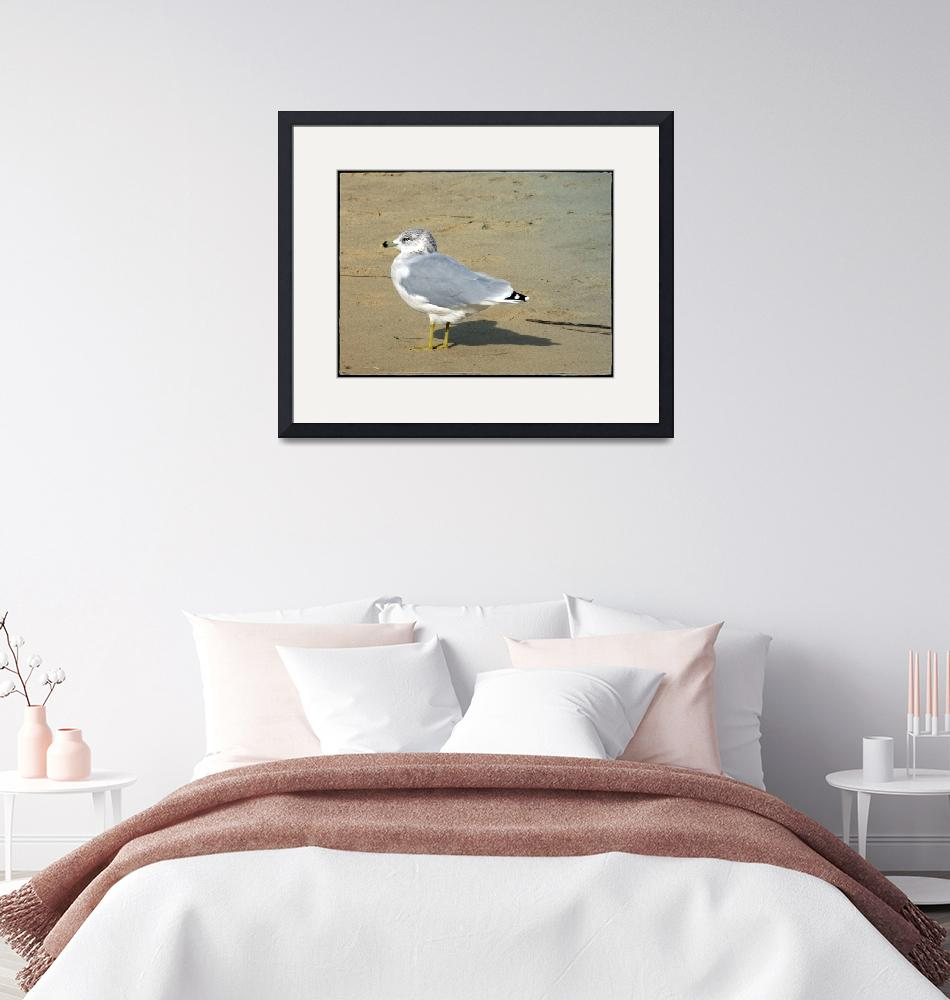 """""""Lonely Seagull""""  (2012) by GiorgettaMcRee"""
