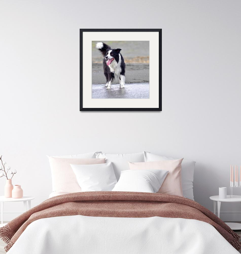 """""""Border Collie at Beach""""  (2018) by pix4japan"""