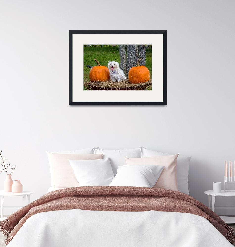 """""""White Maltese Dog in Wheelbarrow with Pumpkins"""" (2017) by MotherNature1"""