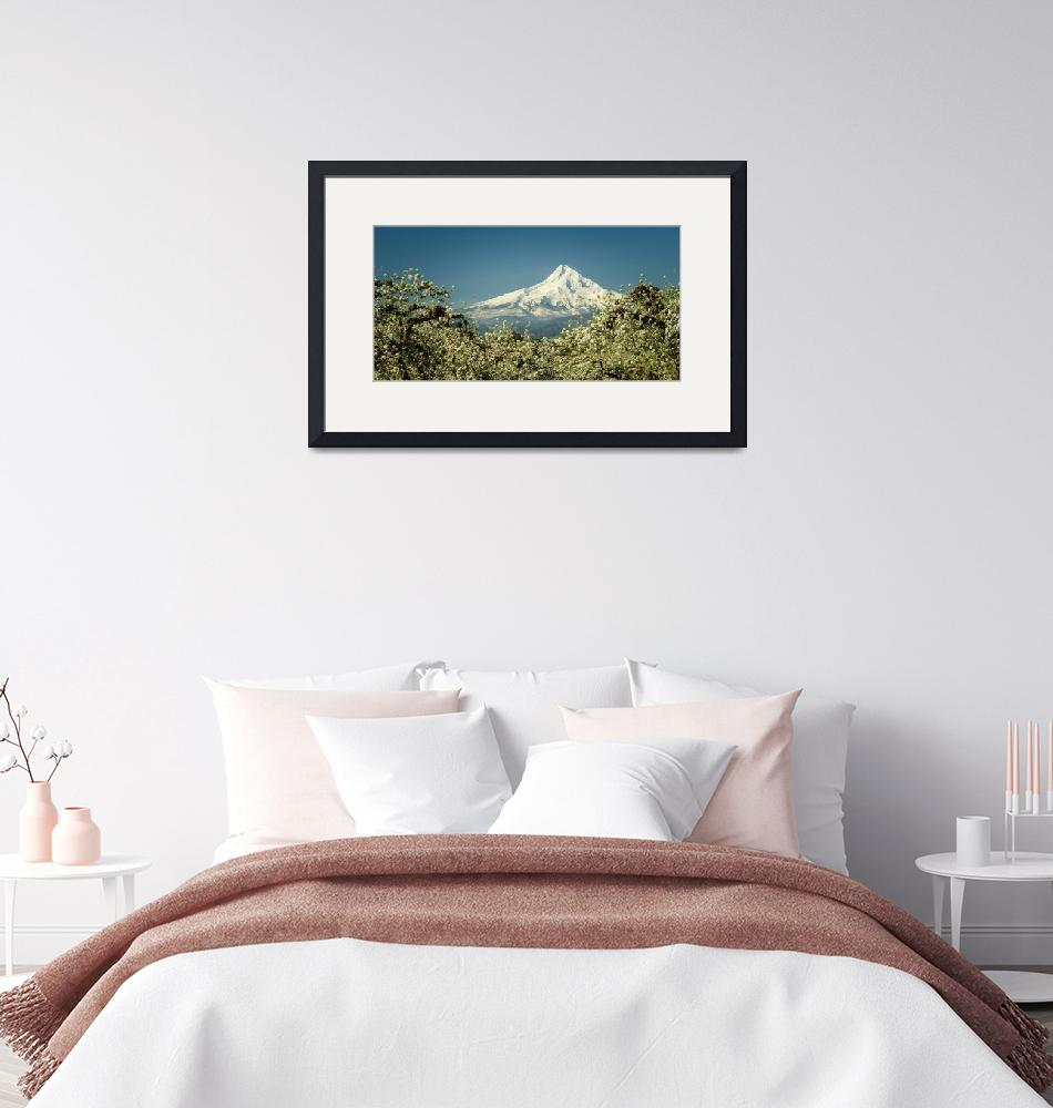 """Mt. Hood in Blossoms""  (2018) by boppintheblues"