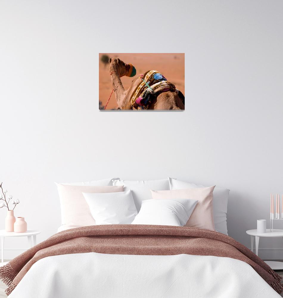 """""""Omani One Hump Camel""""  (2007) by dennisflood"""