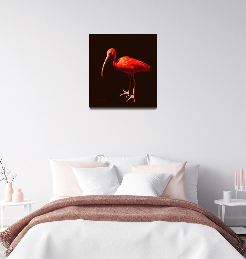 """Scarlet Ibis on Black""  (2011) by AnimalsbyDiDi"