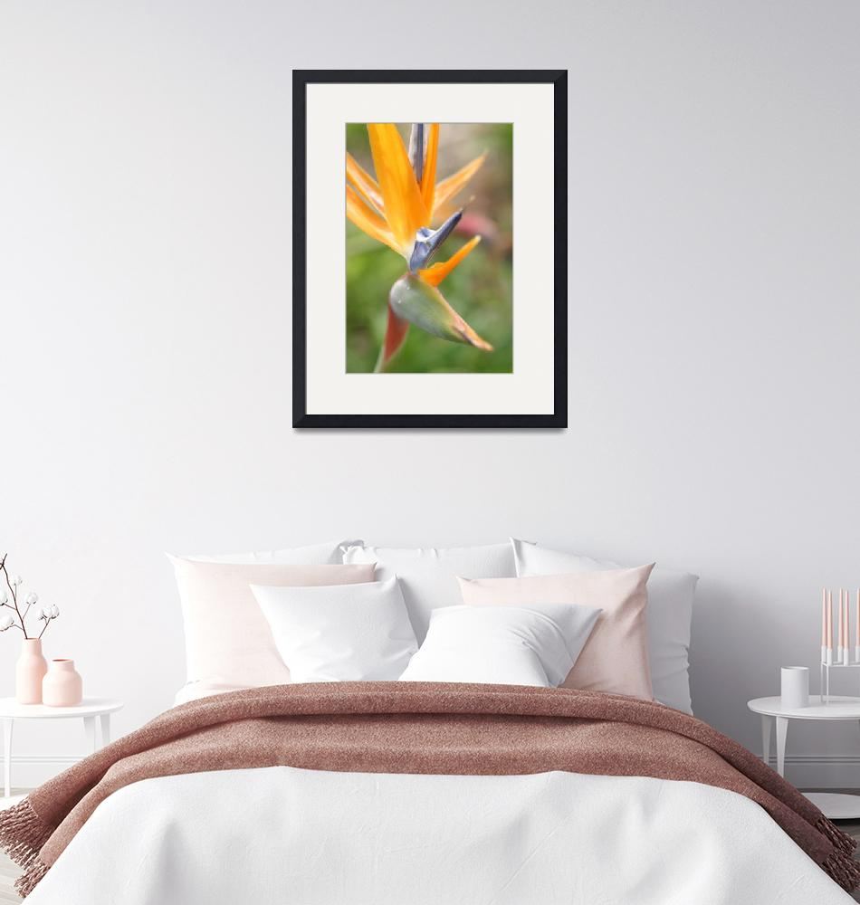"""""""Bird Of Paradise Flower""""  (2010) by SharpArt"""