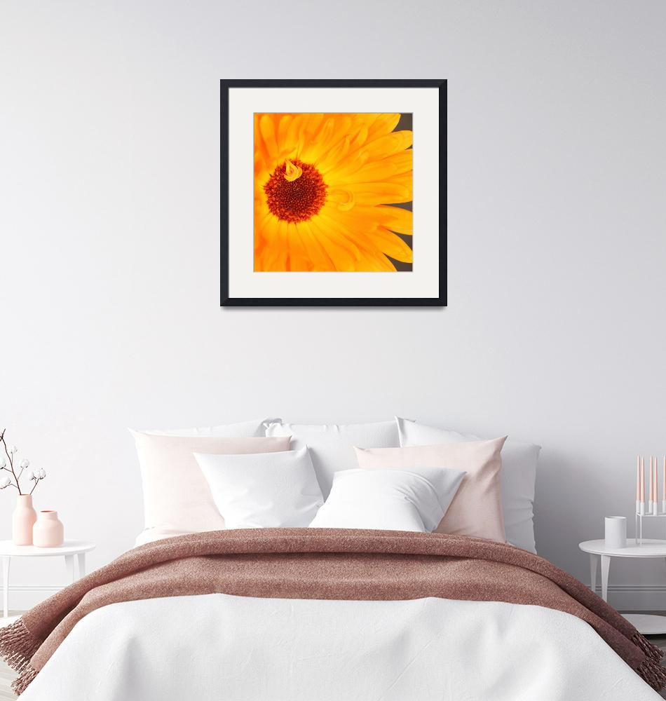"""""""Sunny Flower Heart""""  (2012) by SYoungPhotography"""